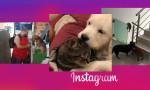 Instagram-Logo-Recovered